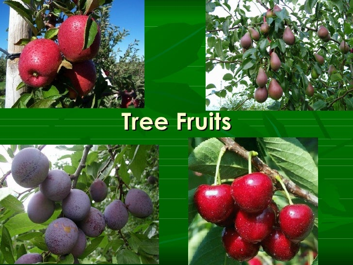 Fruits   tree fruit general