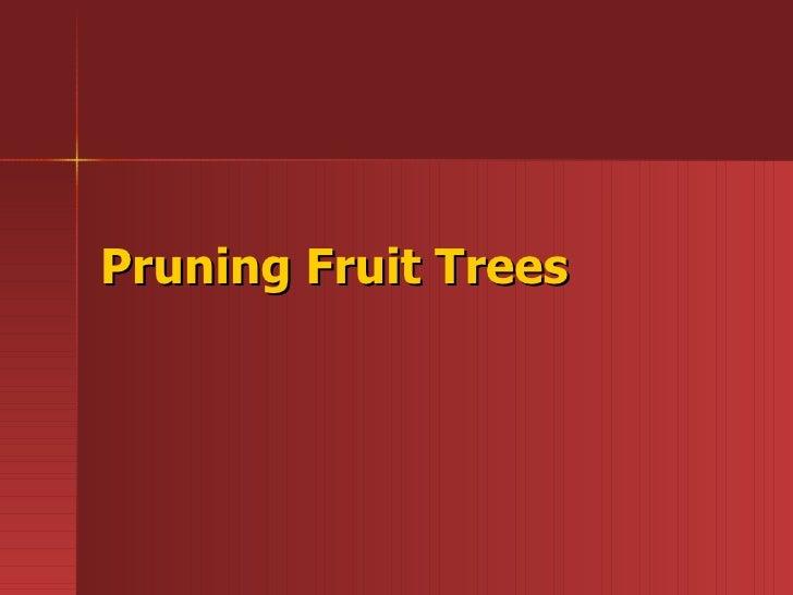 Fruits   tree pruning