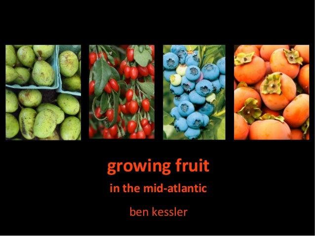 growing fruitin the mid-atlantic   ben kessler