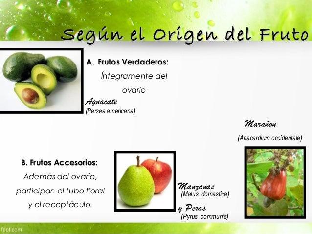 Tipos de Fruto Botánica pabloacosta