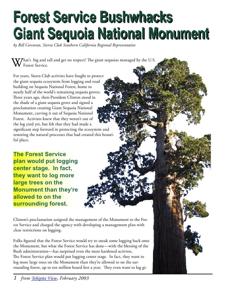 Forest Service BushwhacksGiant Sequoia National Monumentby Bill Corcoran, Sierra Club Southern California Regional Represe...