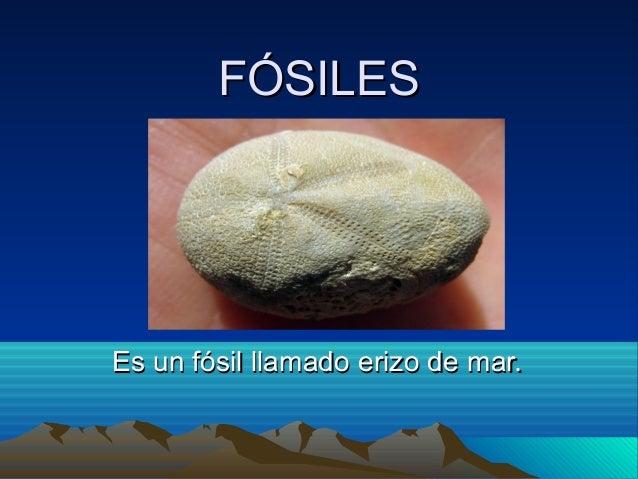 FÓSILES  Es un fósil llamado erizo de mar.