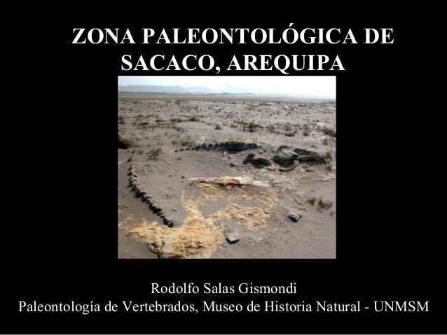 ZONA PALEONTOLÓGICA DE           SACACO, AREQUIPA                     Rodolfo Salas GismondiPaleontología de Vertebrados, ...