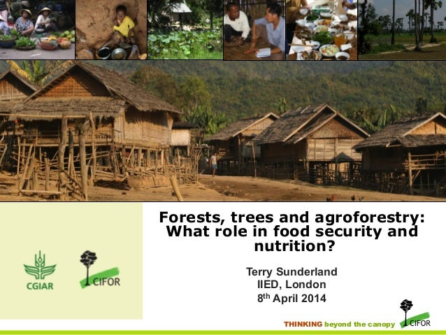 Food security and nutrition: The role of forests