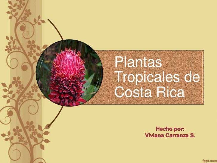 PlantasTropicales deCosta Rica