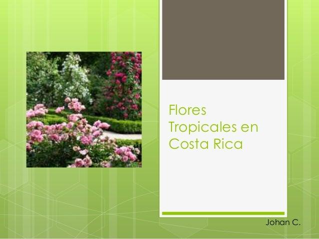 Flores Tropicales en Costa Rica Johan C.