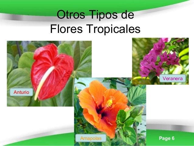powerpoint templates page 6 otros tipos de flores tropicales anturio