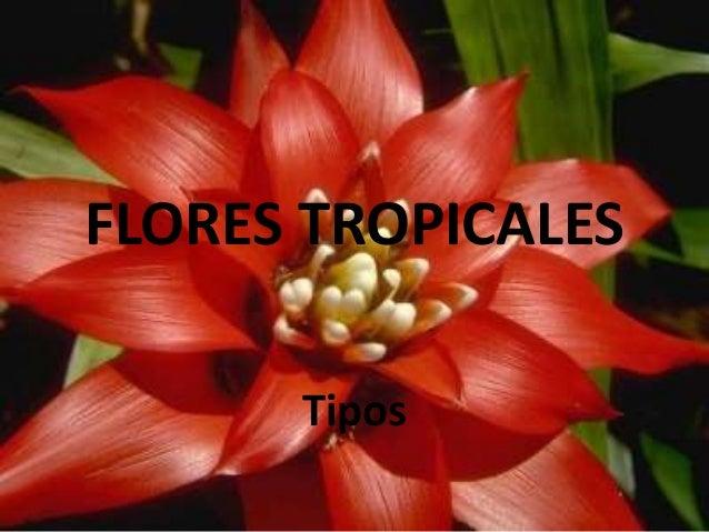 Flores Tropicales Tipos