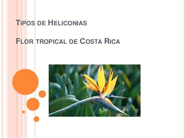 Tipos de Heliconias