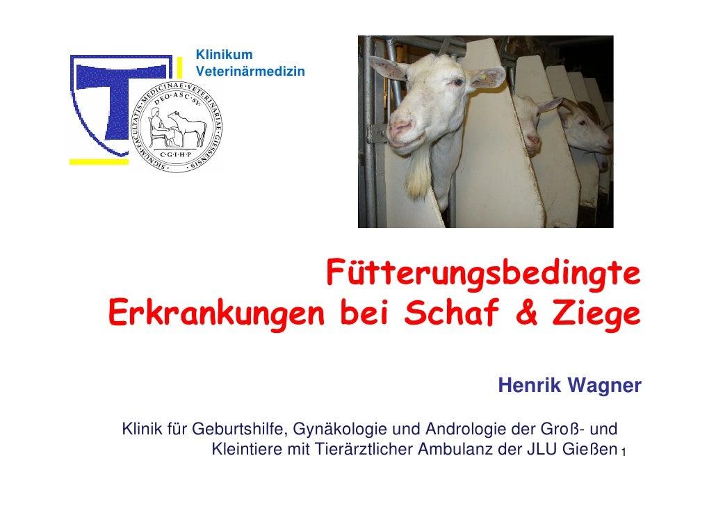 Fütterungsbedingte Erkrankungen bei Schafen und Ziegen