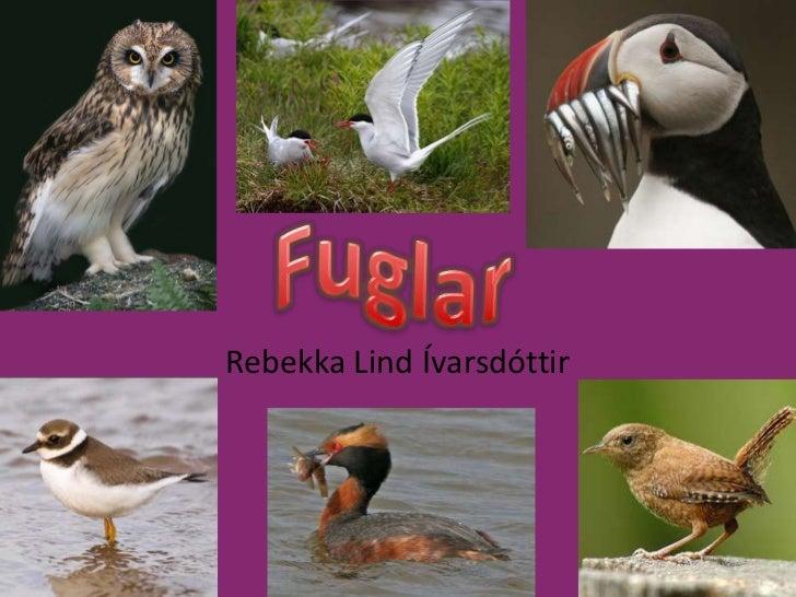 Fuglar<br />Rebekka Lind Ívarsdóttir<br />