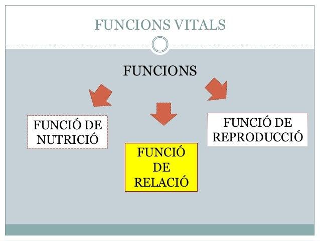 FUNCIONS VITALS FUNCIONS FUNCIÓ DE RELACIÓ FUNCIÓ DE REPRODUCCIÓ FUNCIÓ DE NUTRICIÓ