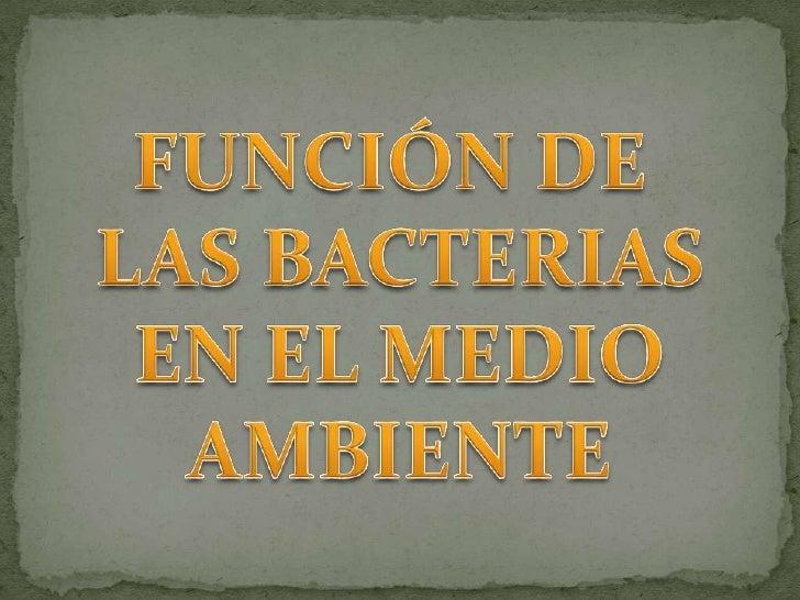Las bacterias desempeñan un papel importante en el reciclado demuchos elementos y compuestos químicos en la naturaleza. En...