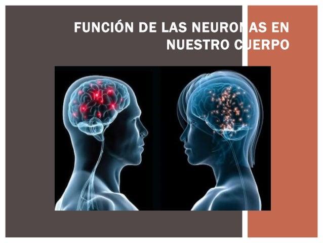 FUNCIÓN DE LAS NEURONAS EN NUESTRO CUERPO