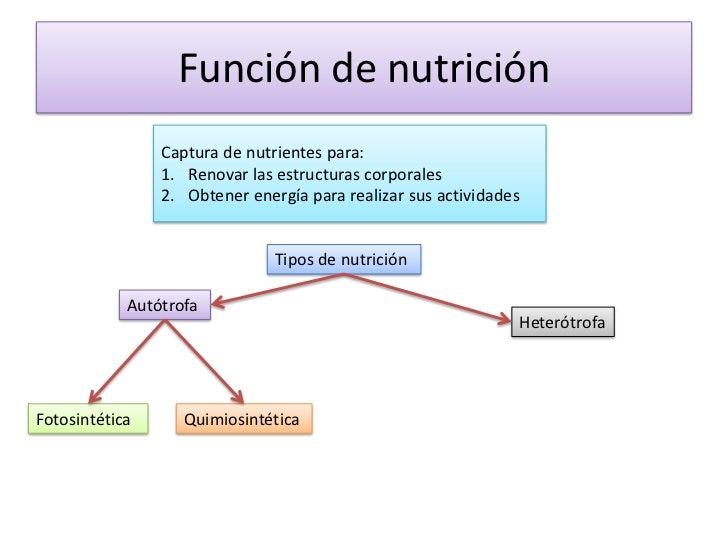 proceso anabolico de la nutricion autotrofa