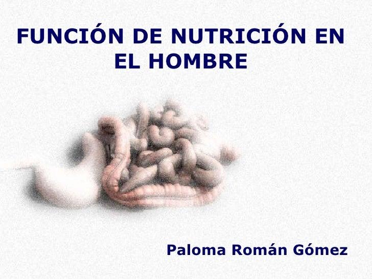Función de nutrición en el hombre