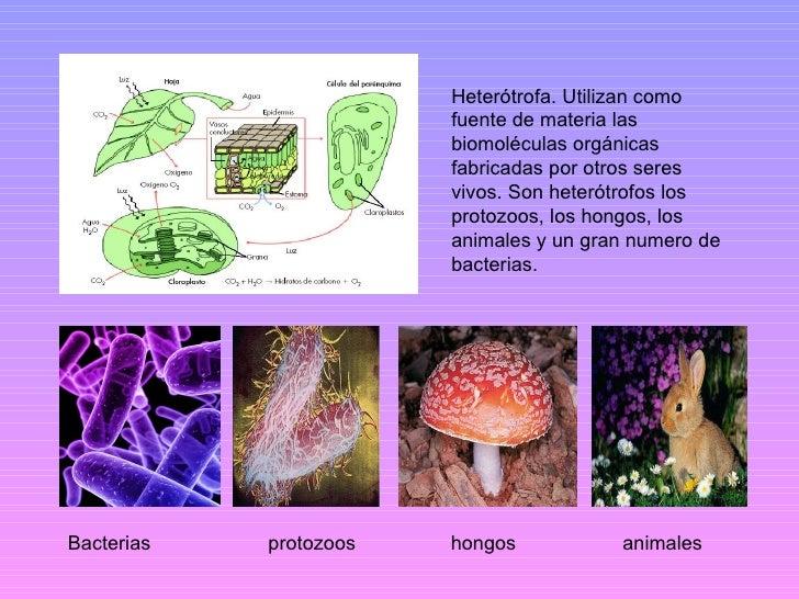 Autotrofos fotosinteticos y quimiosinteticos 70