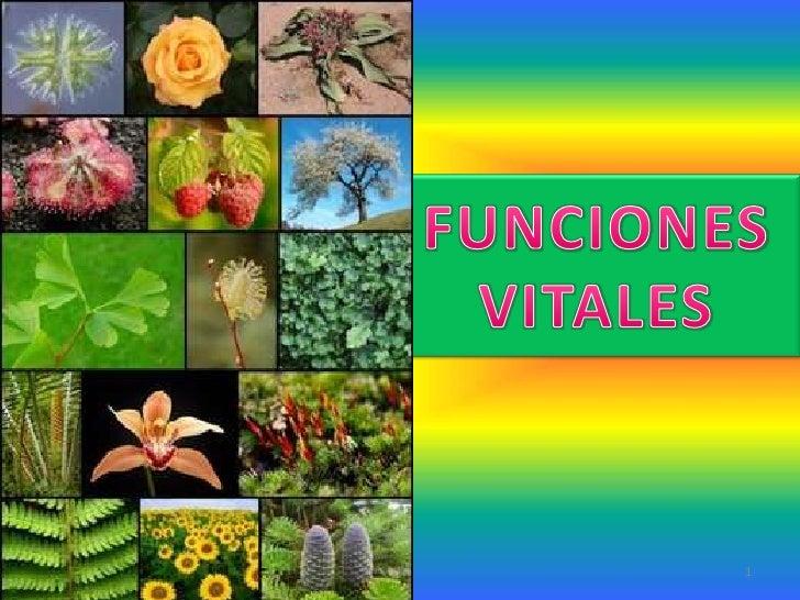 Funciones vitales de las plantas for Funcion de las plantas ornamentales