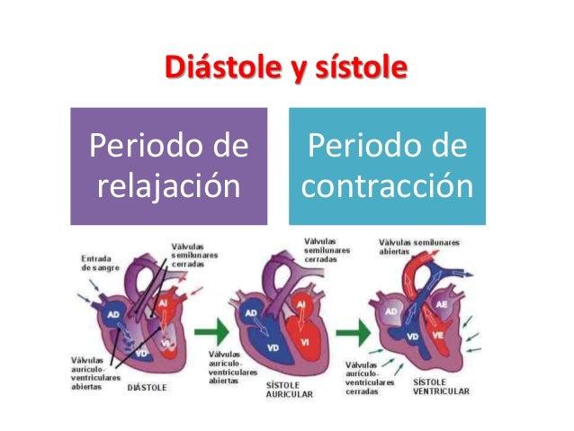 Resultado de imagen para corazon diastole y sistole