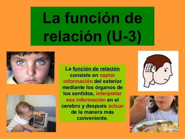 La función de relación (U-3) La función de relación consiste en captar información del exterior mediante los órganos de lo...