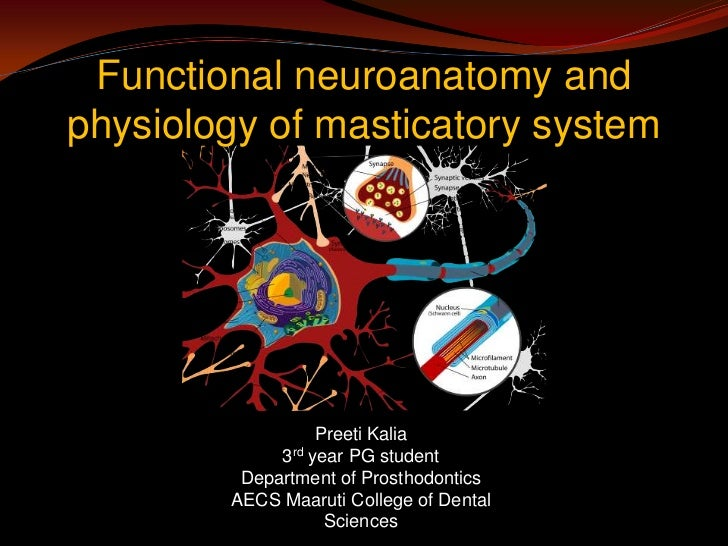 Functional neuroanatomy andphysiology of masticatory system                  Preeti Kalia             3rd year PG student ...