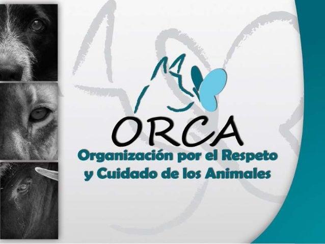 YO SOY ORCA O.R.C.A. es la Organización por el Respeto y el Cuidado de los animales, es la materialización de la voluntad ...