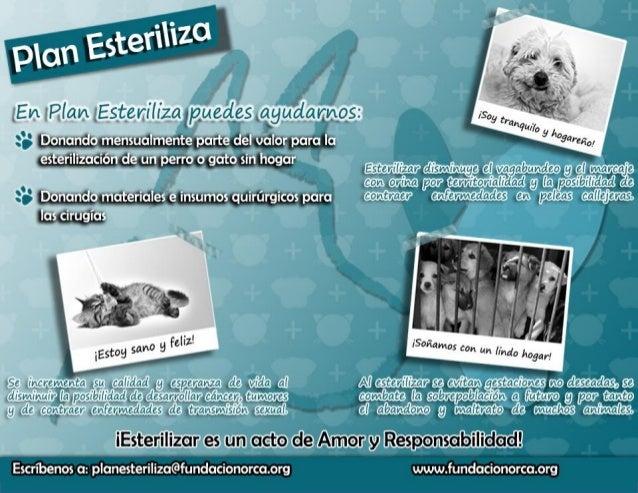 PLAN ESTERILIZA O.R.C.A.GENERALIDADESO.R.C.A. es la Organización por el Respeto y el Cuidado de los Animales, donde nosreu...