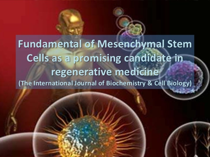 Fundamental of mesenchymal stem cells as a promising candidate in regenerative medicine
