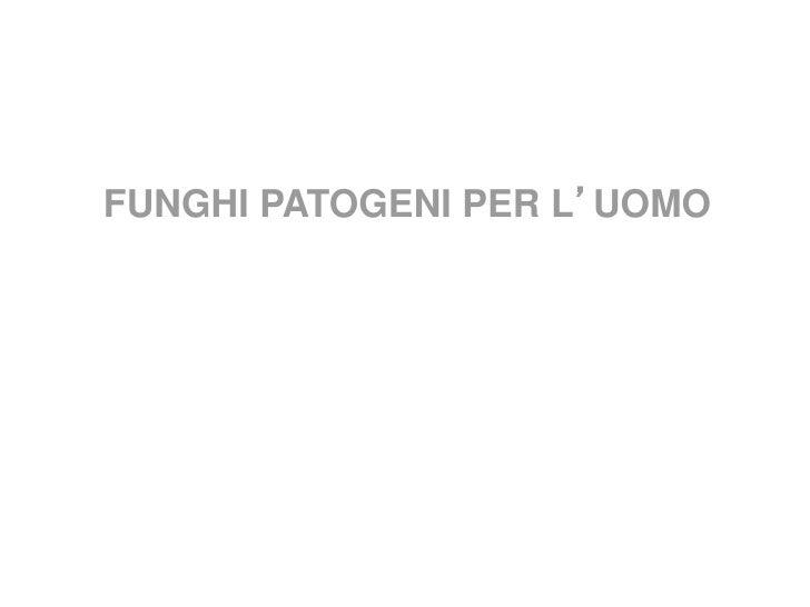 Funghi pat