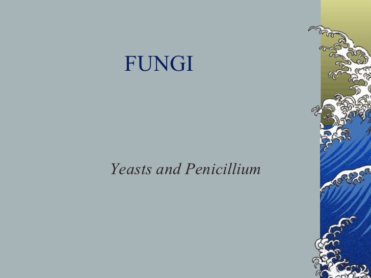 FUNGI Yeasts and Penicillium