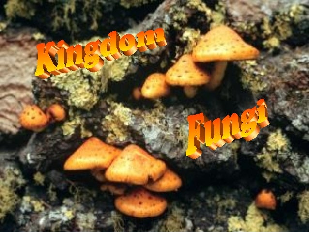 Characteristics of Fungi   Eukaryotic   Cell walls contain carbohydrate-chitin   Multicellular (except yeast)   Reprod...