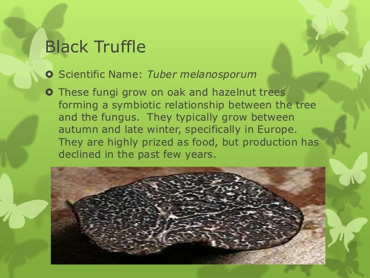 Fungi examples for Give the scientific word for soil