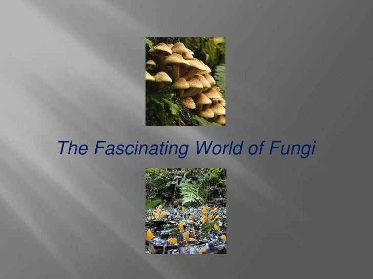 The Fascinating World of Fungi