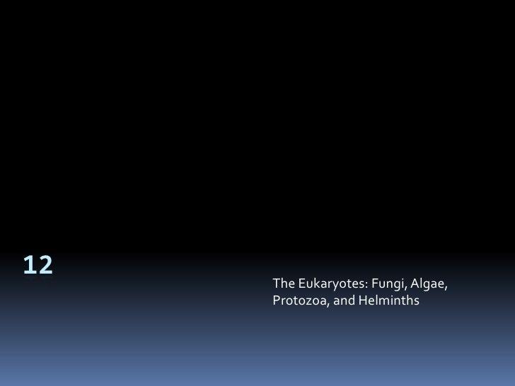 12<br />The Eukaryotes: Fungi, Algae, Protozoa, and Helminths<br />