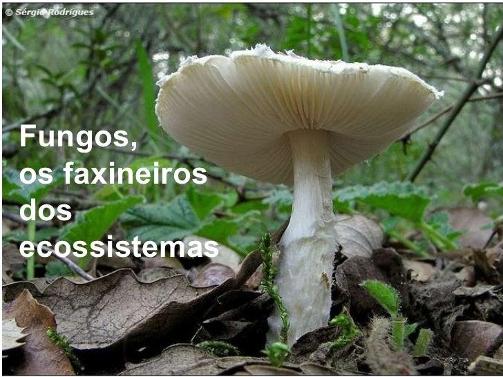 Fungos,  os faxineiros  dos ecossistemas