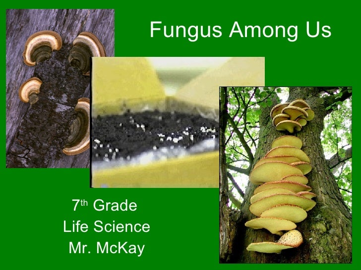 Fungus Among Us 7 th  Grade  Life Science Mr. McKay