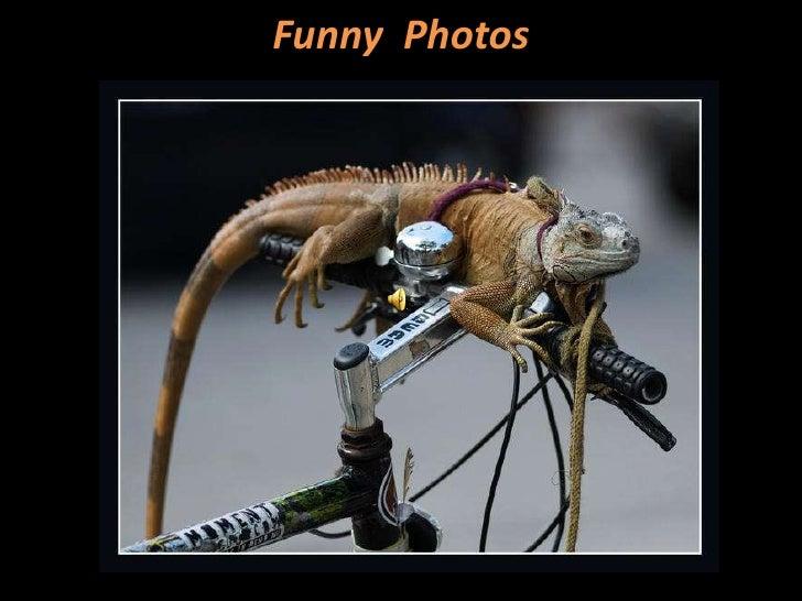 Funny  Photos<br />
