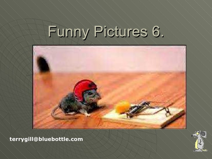 Funny Pictures 6. [email_address]
