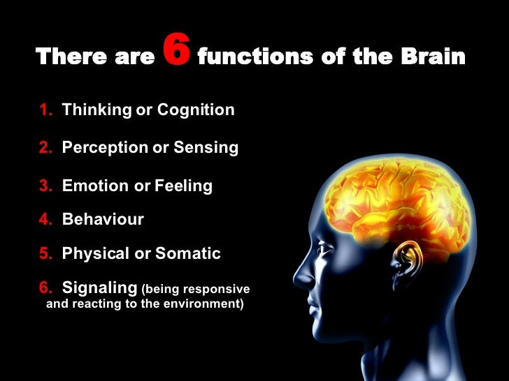 Functions Of The Brain Presentation on Our Senses