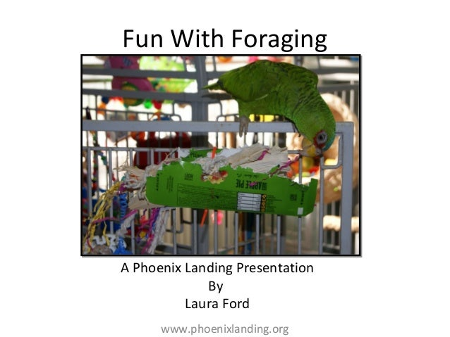 Fun with foraging