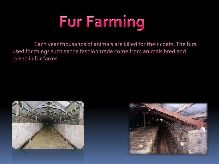 Chinchilla Fur Farm Fur farming. � � � �