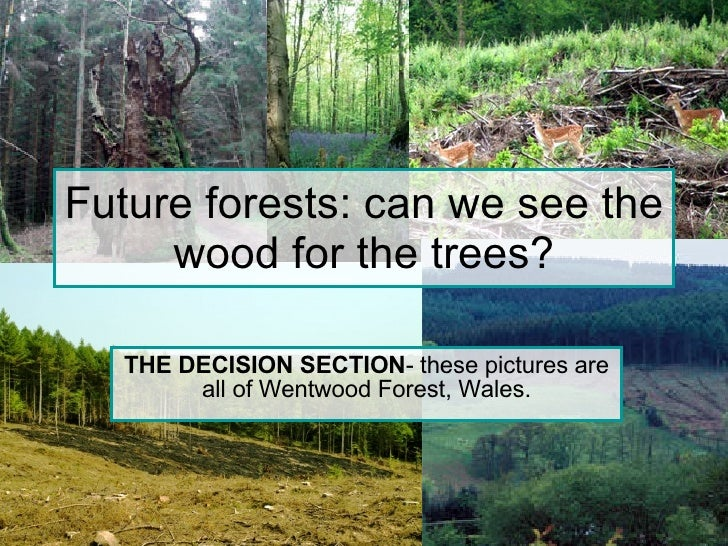 Future forests: can we see the wood for the trees? THE DECISION SECTION - these pictures are all of Wentwood Forest, Wales.