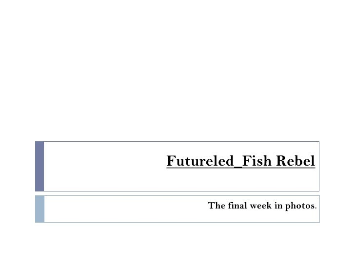 Futureled_Fish Rebel<br />The final week in photos.<br />