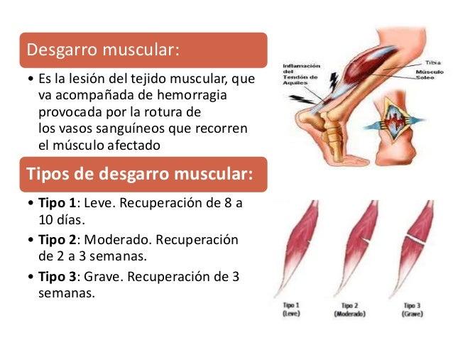 funcion de los esteroides en el cuerpo