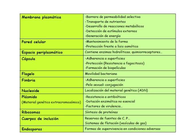 diferencia esteroles y esteroides