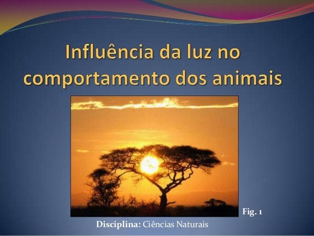 G5 influência da luz no comportamento dos animais   apresentação