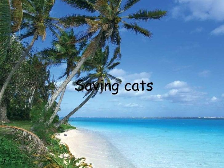 Saving cats