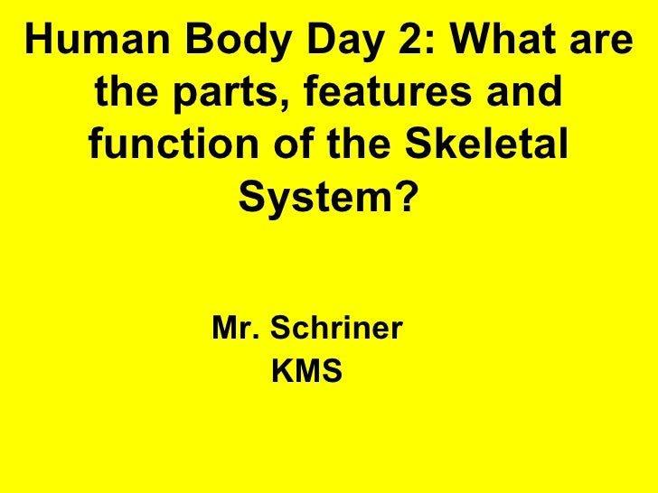 Human Body Day 2: What are the parts, features and function     of the Skeletal System?             Mr. Schriner          ...