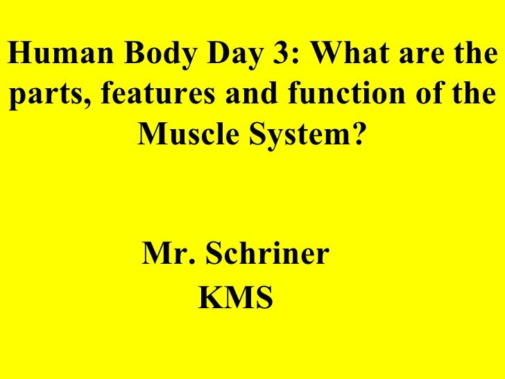 Human Body Day 3: What are the parts, features and function of the Muscle System? <ul><li>Mr. Schriner </li></ul><ul><li>K...