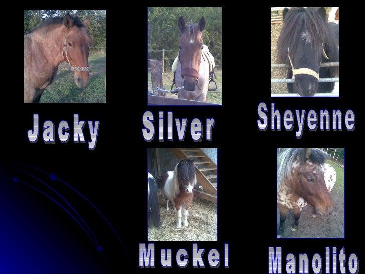 Jacky Silver Sheyenne Muckel Manolito